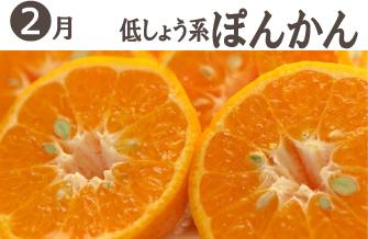 武田の頒布会2月低しょう系ポンカン