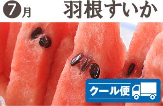 武田の頒布会7月・羽根すいか