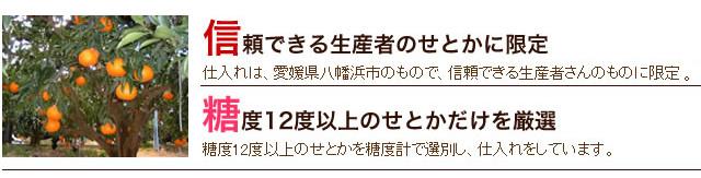 武田青果~Fruit Takeda~の愛媛産せとか