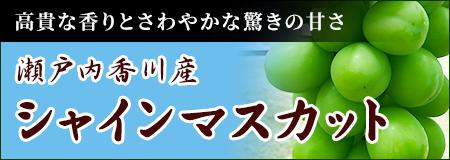 シャインマスカットの果物通販