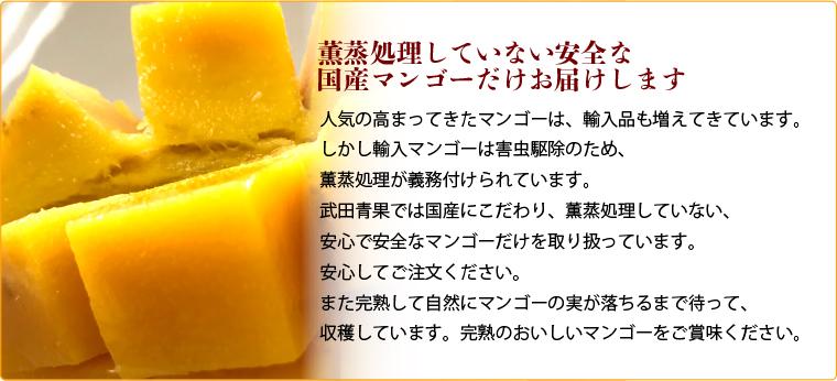 人気の高まってきたマンゴーは、輸入品も増えてきています。 しかし輸入マンゴーは害虫駆除のため、 薫蒸処理が義務付けられています。 武田青果では国産にこだわり、薫蒸処理していない、 安心で安全なマンゴーだけを取り扱っています。 安心してご注文ください。 また完熟して自然にマンゴーの実が落ちるまで待って、 収穫しています。完熟のおいしいマンゴーをご賞味ください。